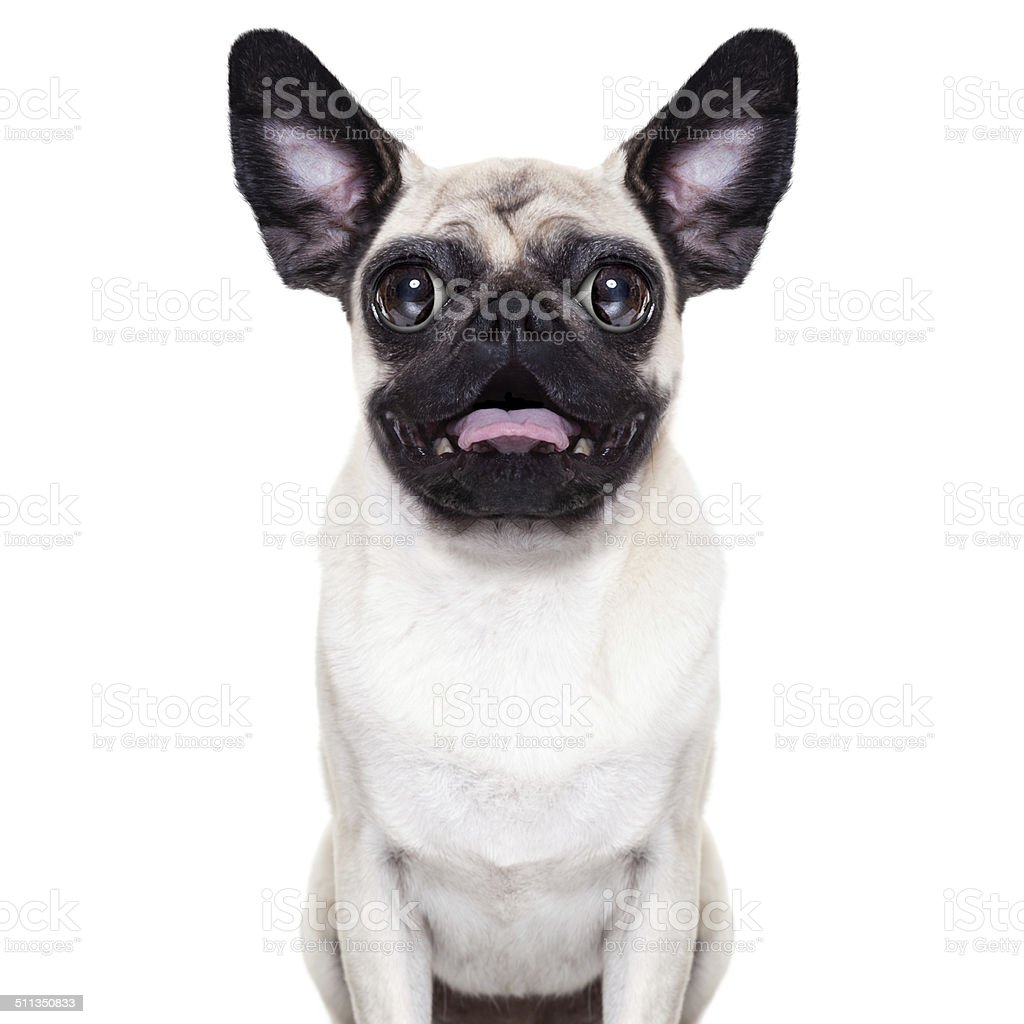 Surprised crazy dog stock photo
