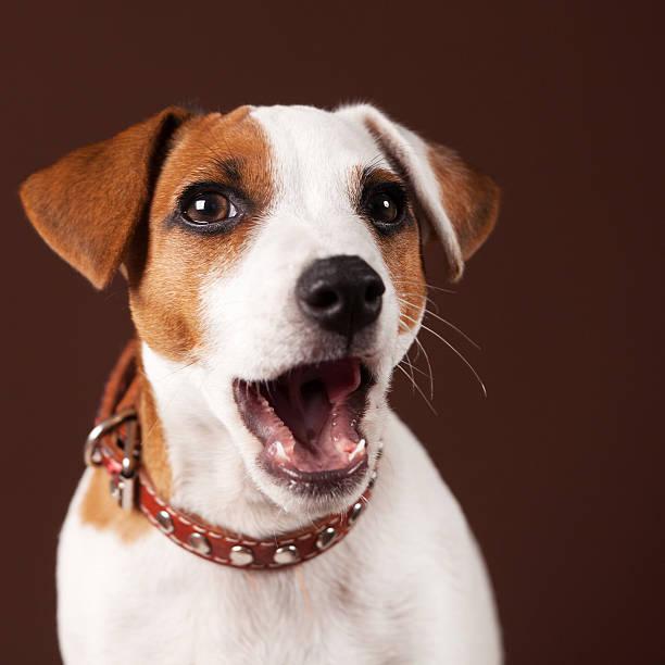 Surprised dog stock photo