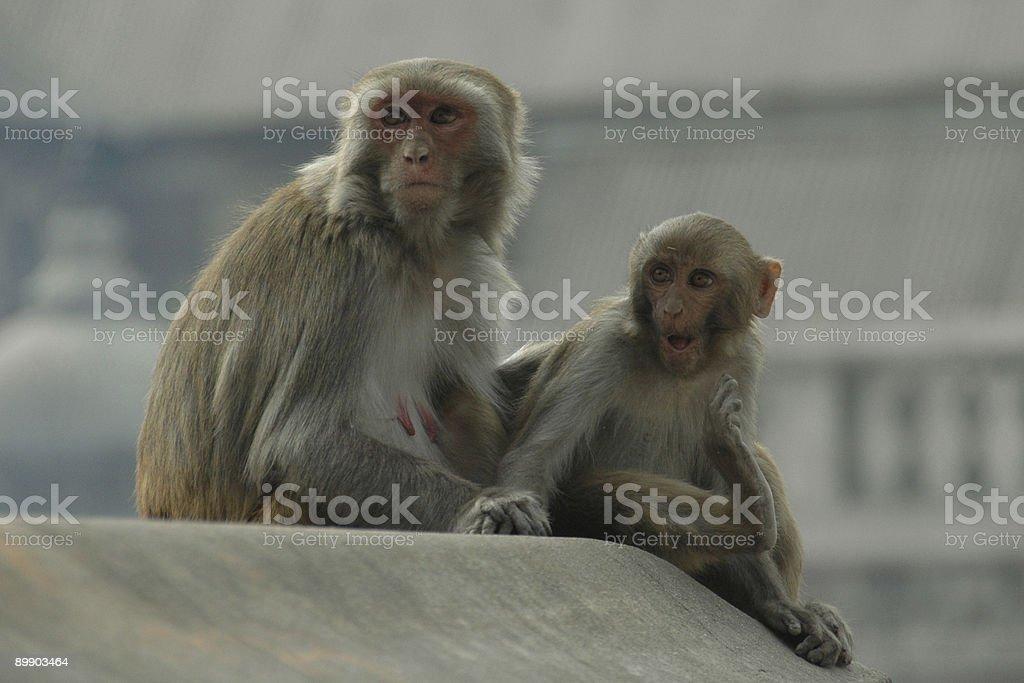 Sorprendido en mono foto de stock libre de derechos