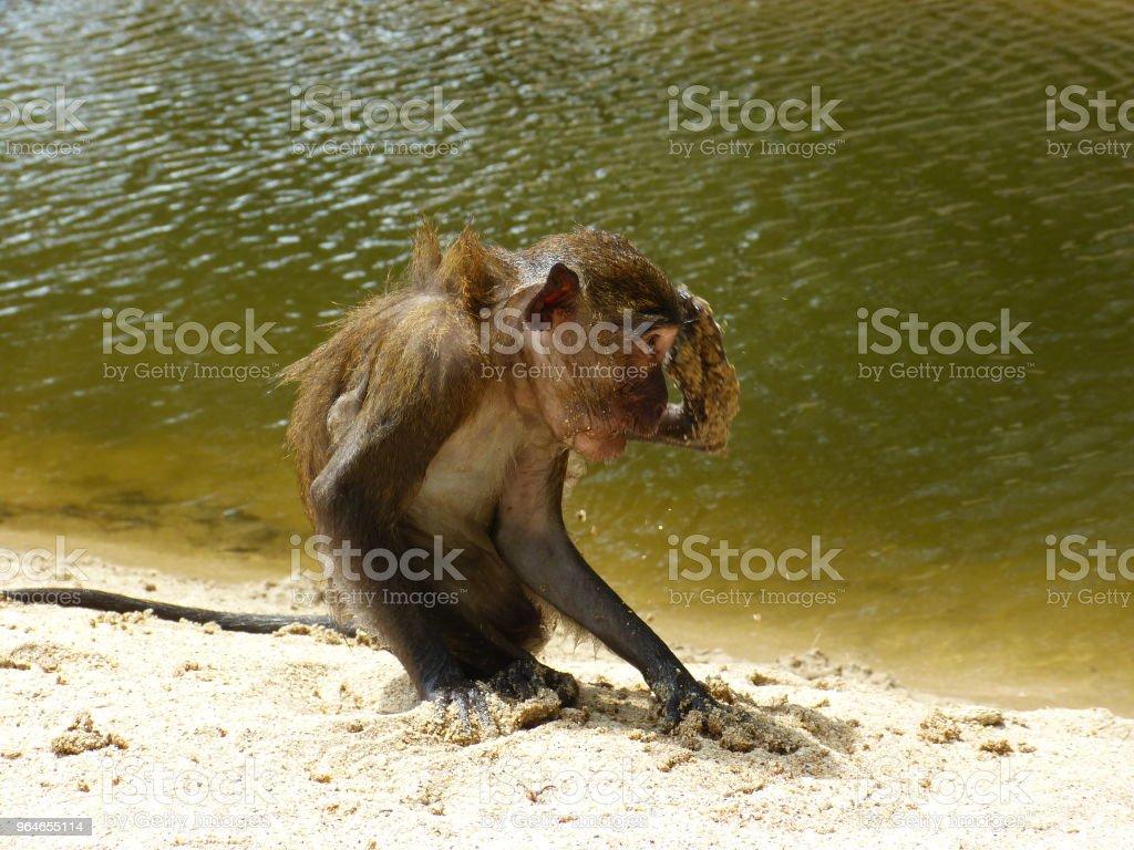 Überrascht monkey – Foto