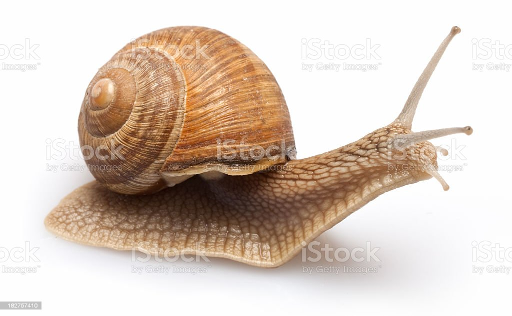 Surprised  Snail royalty-free stock photo