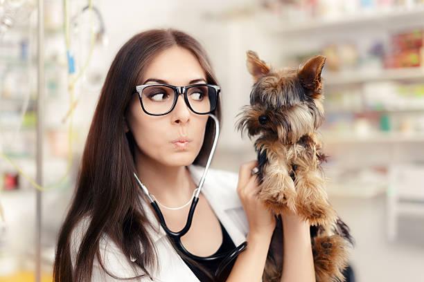 Surprised veterinarian female doctor with cute dog picture id521498234?b=1&k=6&m=521498234&s=612x612&w=0&h=mqnykf0qjm24vhaf99bn635e7franr kozmmrekmsae=