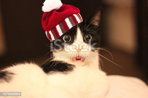 Surprised white and black cat with a knitted striped hat with pompon