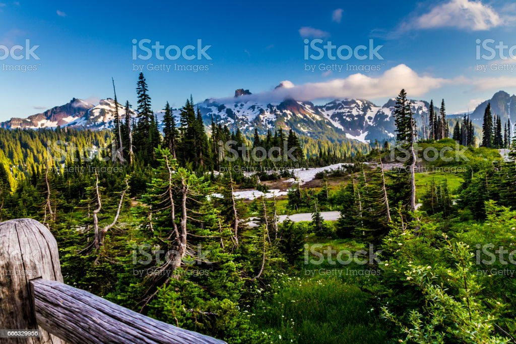 Surreal Alpine Meadow at Paradise on Mount Rainier. stock photo