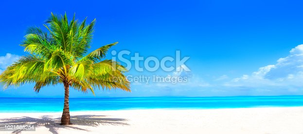 Surreal and wonderful dream beach with palm tree on white sand and turquoise ocean