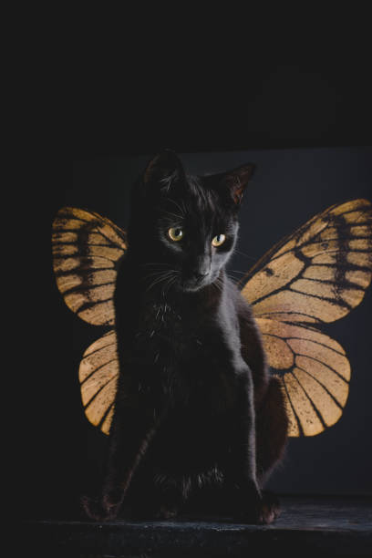 surreal butterfly cat angel stock photo