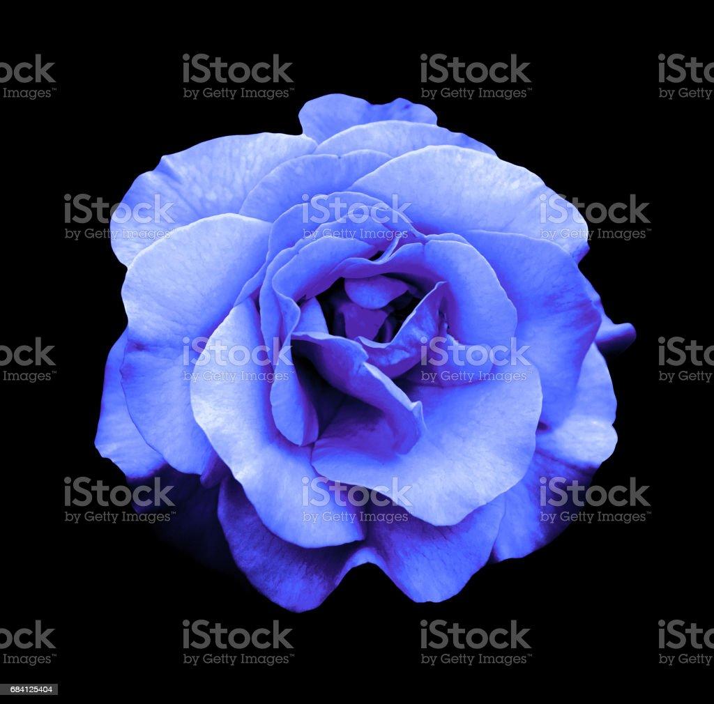 Surreal dark chrome blue rose flower macro isolated on black royaltyfri bildbanksbilder