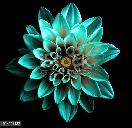 istock Surreal dark chrome turquoise flower dahlia macro isolated 514221132