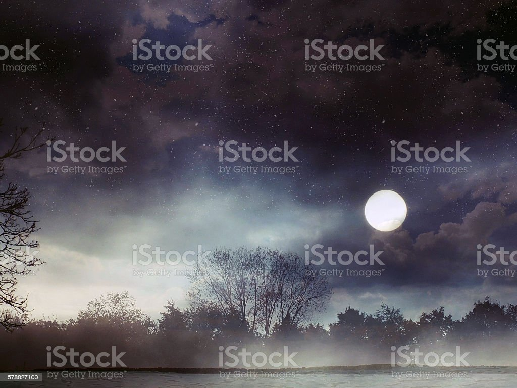 Surreal forest stock photo