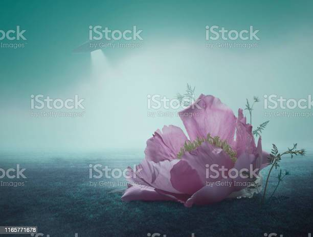 Photo of Surreal Giant Flower of peony