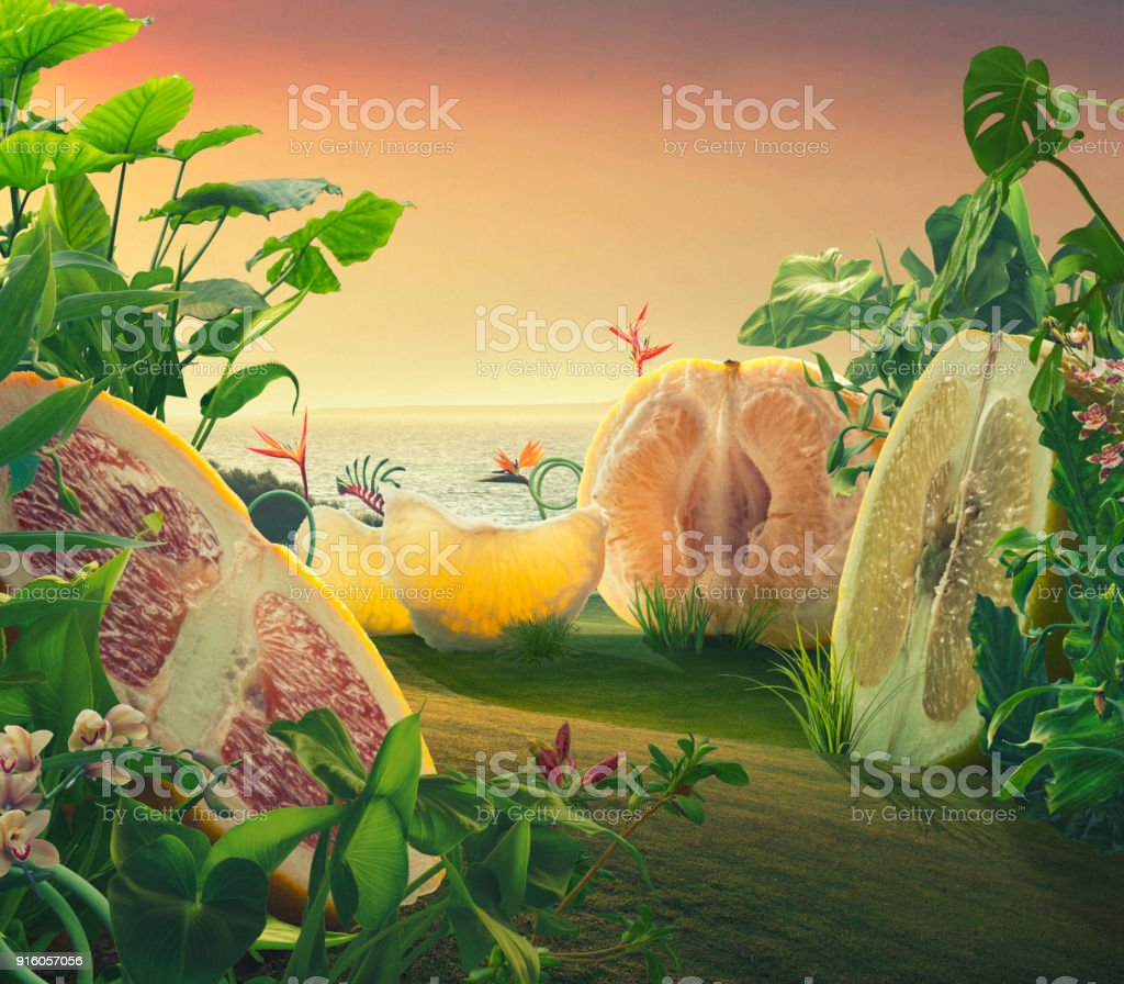 Surreal giant grapefruits on a field stock photo