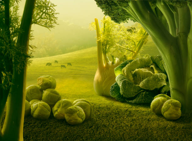 Surreal giant green vegetables in sunset field Surreal giant green vegetables in sunset field giant fictional character stock pictures, royalty-free photos & images