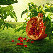 Surreal giant pomegranate in nature