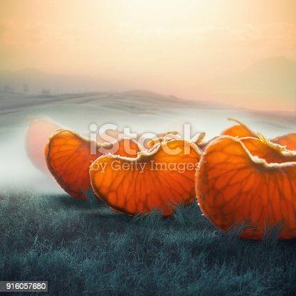 surreal giant tangerine segments in foggy field