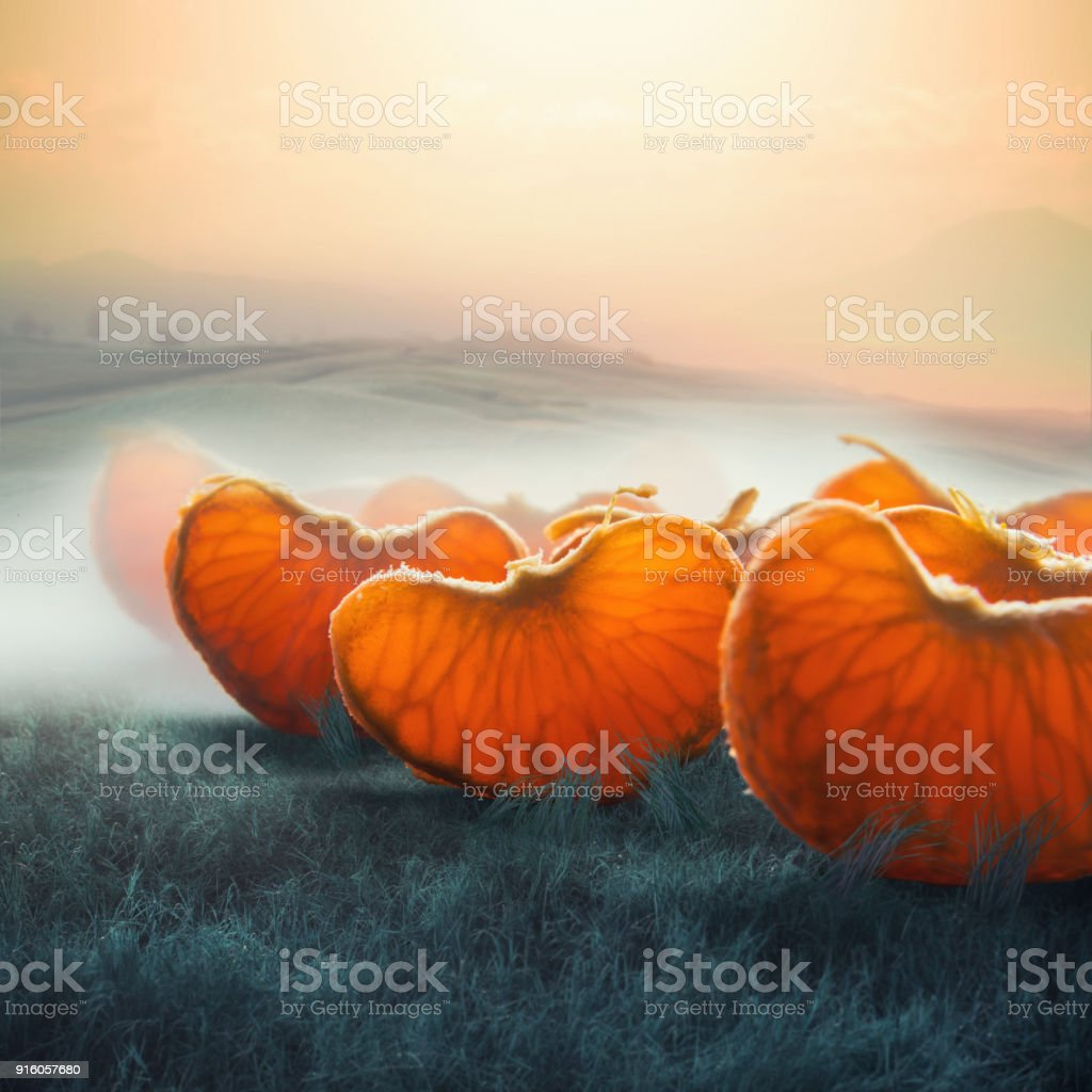 surreal giant tangerine segments in foggy field stock photo