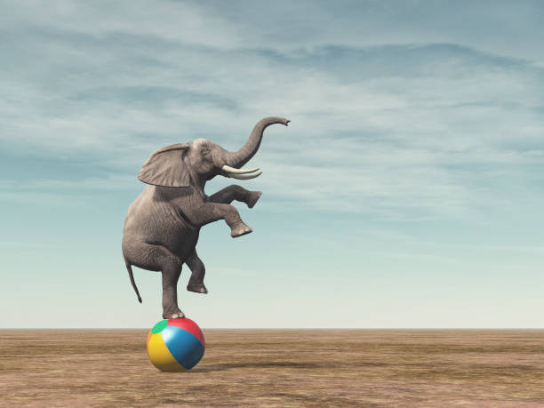 surreal image of an elephant balancing on a beach ball - balance stock pictures, royalty-free photos & images
