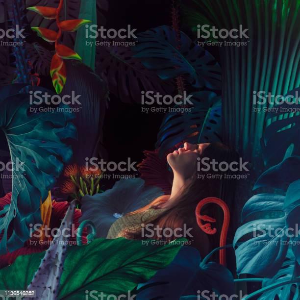 Surreal jungle portrait picture id1136546252?b=1&k=6&m=1136546252&s=612x612&h=0drxxwjuu5wppu wmcdoddoubkjxasthnn9zcdnwddk=