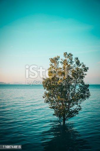 Tree growing in water