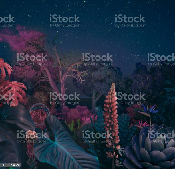 Photo of Surreal night forest