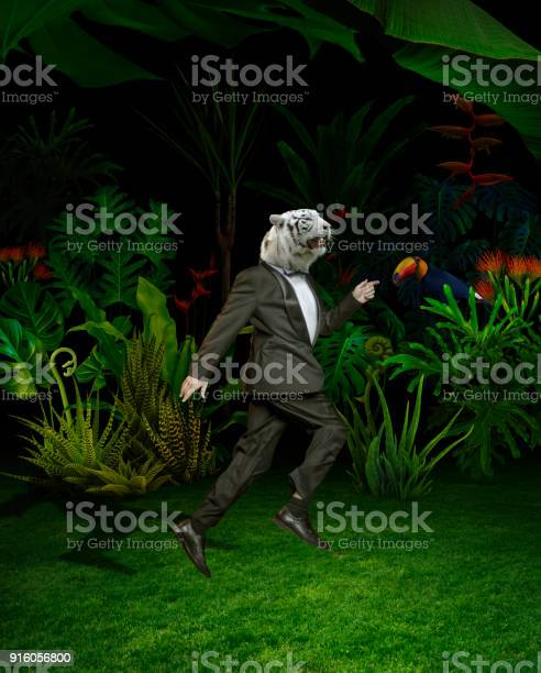 Surreal portret of tiger men in night jungle picture id916056800?b=1&k=6&m=916056800&s=612x612&h=y3vp pzvcrvjceh3lzb 82dhigbqbxkmlf8nwh3baw4=