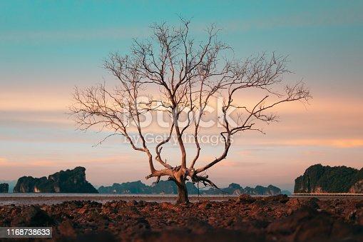 Bare twisted tree near drying lake