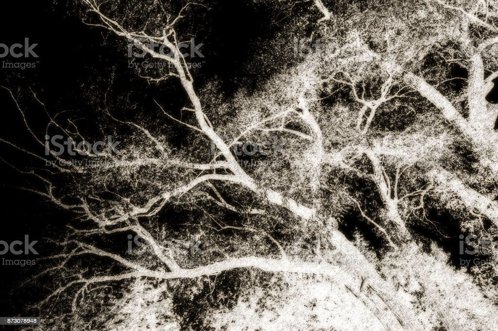 Surreal image of treetop branches and leaves against black sky....