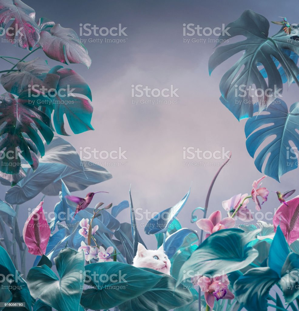 超現實主義的熱帶背景 - 免版稅丁香花圖庫照片
