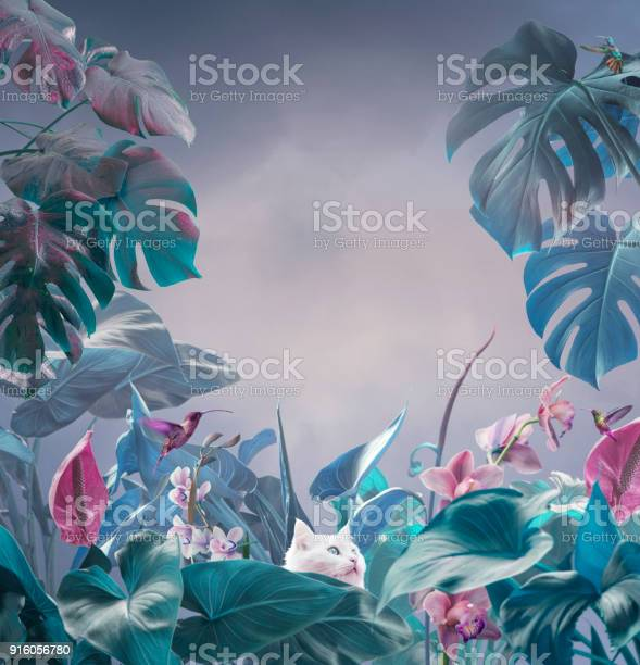 Surreal tropical background picture id916056780?b=1&k=6&m=916056780&s=612x612&h=5e6eh0zziidyrrdudvdtp8doi8c2htfgp8dk4ykjc80=