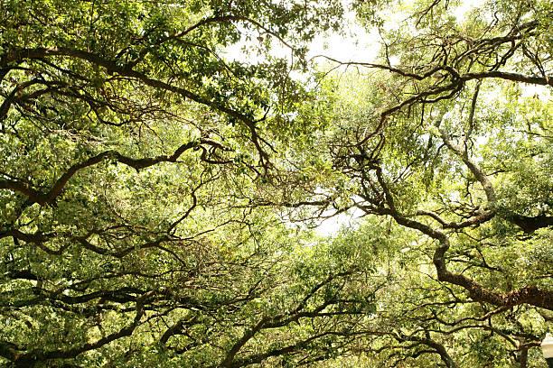 Umgeben von sinous tree trunk – Foto