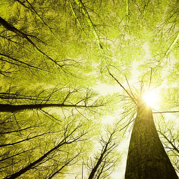 Rodeado de altas palmeras, vista de ángulo bajo de la toma de la temporada - foto de stock