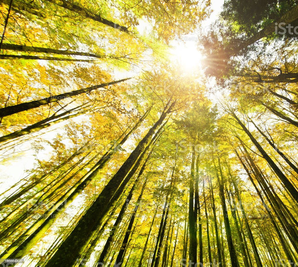 Surrounded By Tall Trees Spring Season Stock Photo ...