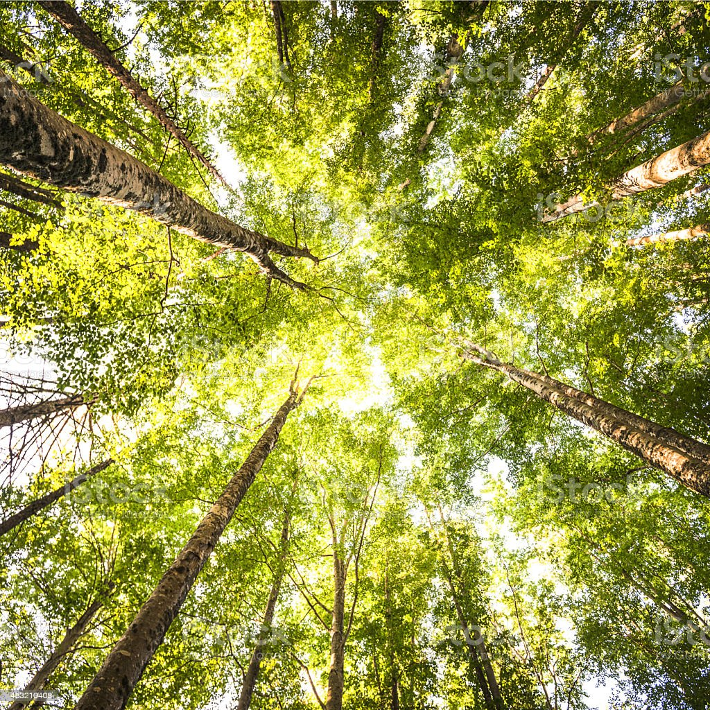 surrounded by tall trees spring season stock photo 483210408 istock