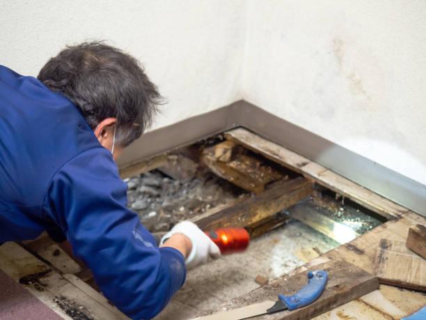 het onderzoeken van de ondervloer ruimte. - schimmel stockfoto's en -beelden