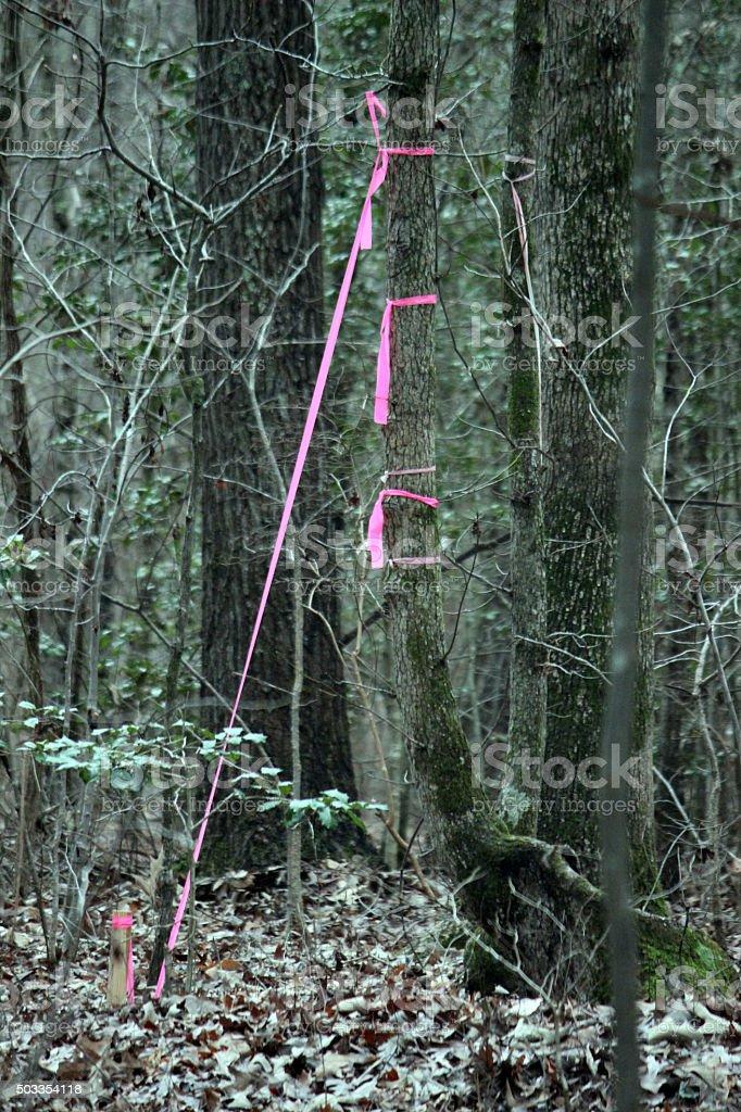 Surveyor's Flags Marking Corner Boundaries of Property stock photo