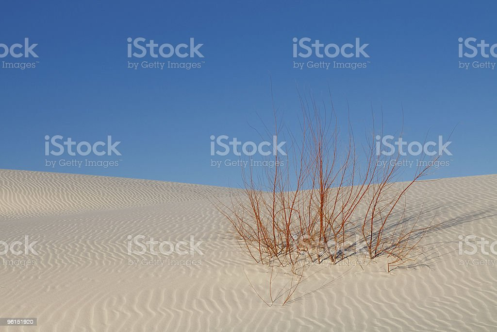Survival - Lone Plant on White Sand Dune royalty-free stock photo
