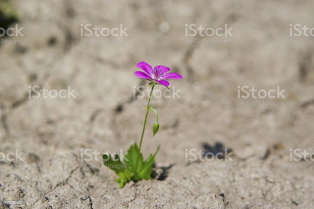 survival stock photo