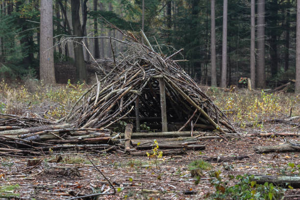 survival shelter in forest stock photo
