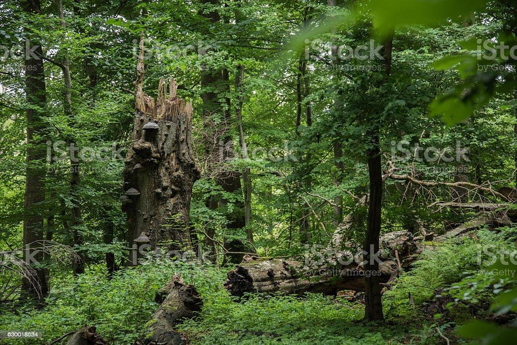 Suserup Forest in Denmark stock photo