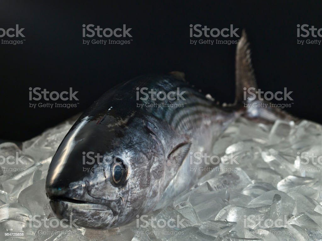 sushi fish,bonito royalty-free stock photo