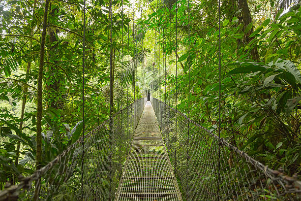 Suspended bridge, Costa Rica Hanging bridge at natural rainforest park in Costa Rica arenal volcano stock pictures, royalty-free photos & images