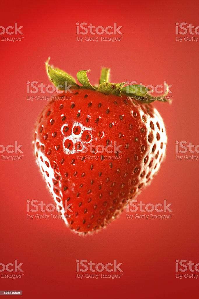 suspended strawberry royalty-free stock photo