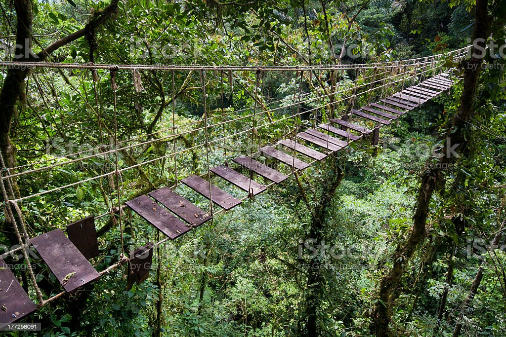Suspension bridge deep in the green forest stock photo