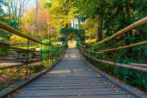 Suspension bridge in Arboretum, Sochi, Russia