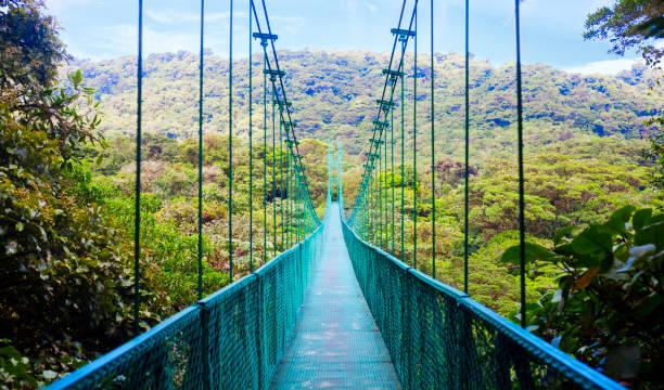 hangbrug in het regenwoud, costa rica - costa rica stockfoto's en -beelden