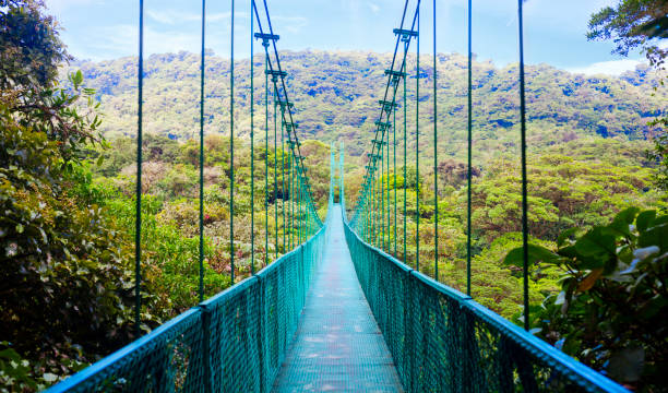 Suspension bridge in rain forest, Costa Rica View of pedestrian suspension bridge in the jungles of Costa Rica. central america stock pictures, royalty-free photos & images