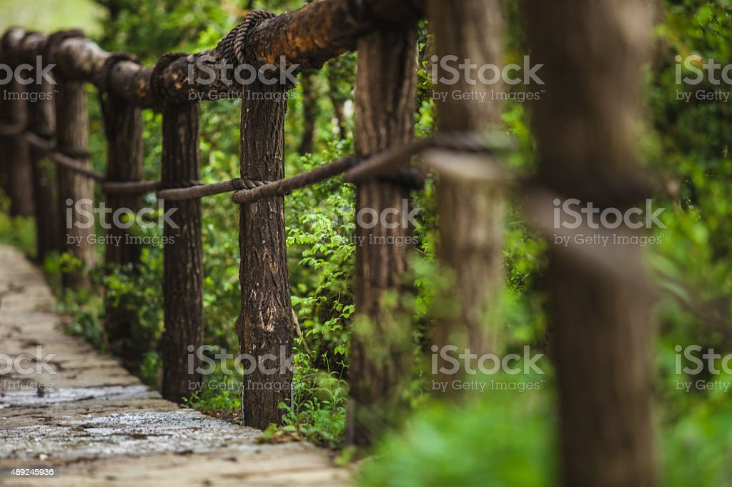 Suspension bridge in the forest stock photo