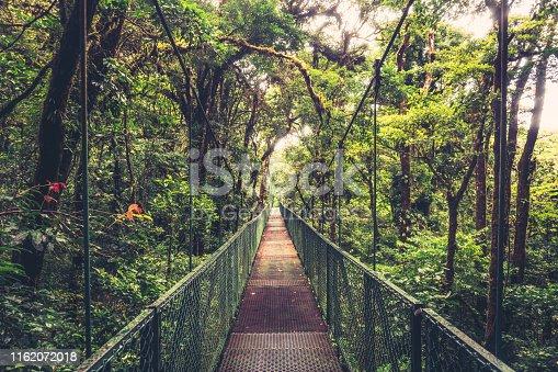 istock Suspension bridge in the Jungle 1162072018