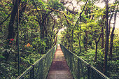 Suspension bridge in the cloud forest of Monteverde