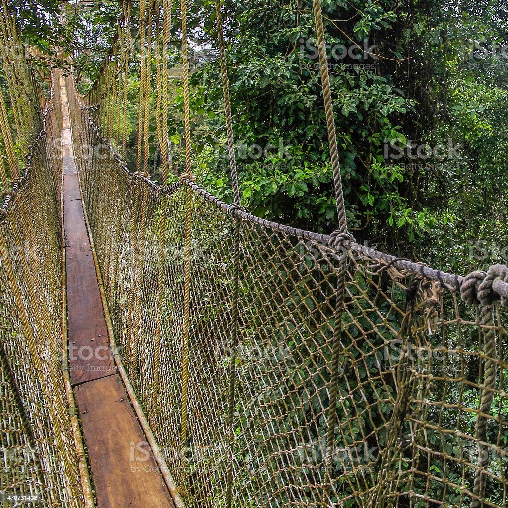 Hängebrücke im Urwald stock photo