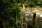 Suspension bridge in the jungles of Borneo